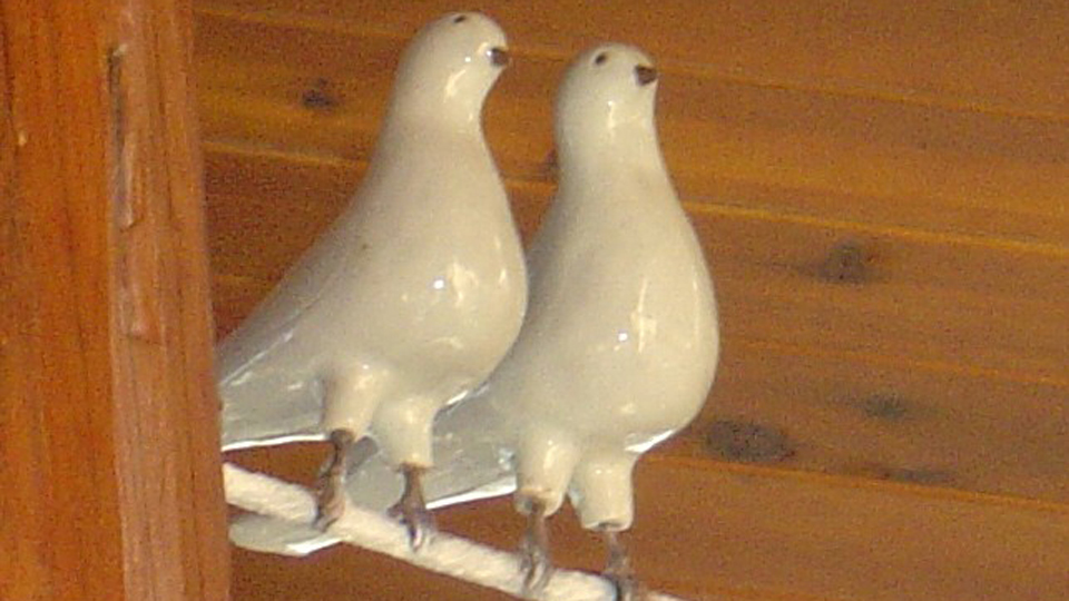 Two Doves Sitting On A Branch Up High