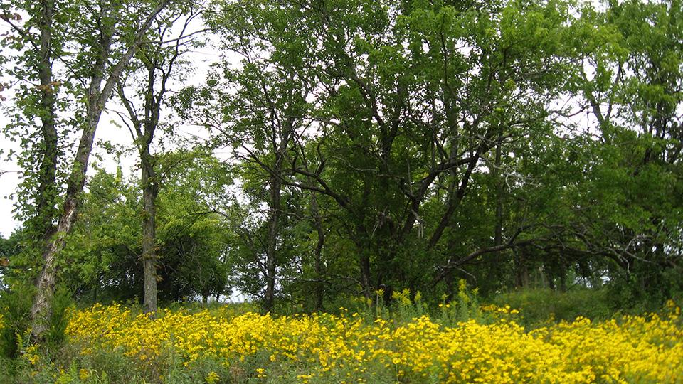 Jerry Smith Park Trail