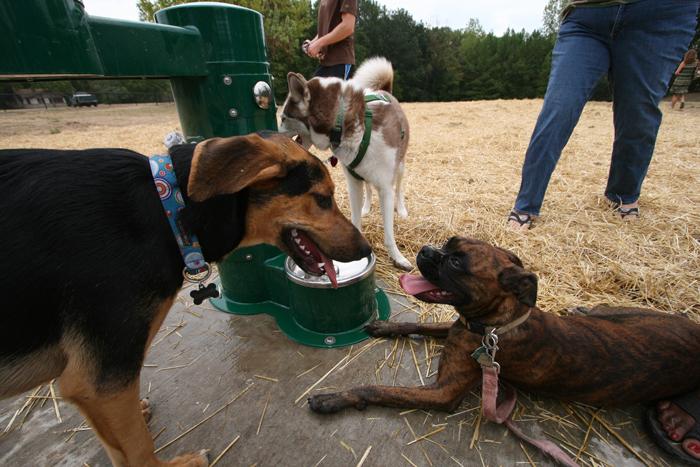 Lafreniere Dog Park Hours