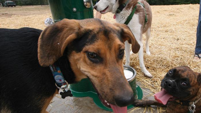 Penn Valley Off Leash Dog Park