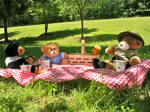 Attend our First Teddy Bear Picnic