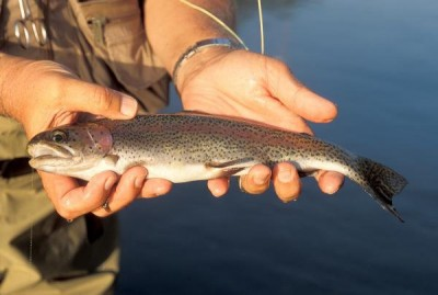 Winter Trout Fishing in Chaumiere Lake