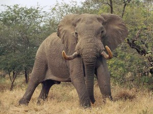 Joining The Stampede For Elephant Conservation