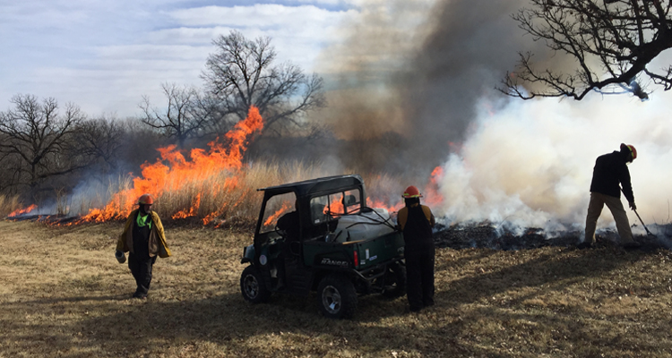 Fire in the Park: Why We Burn