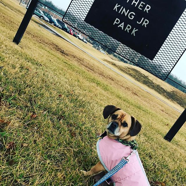 #PuggleInThePark is celebrating #MLKDay with a nature walk along #KCParks Brush Creek. #MLKday2017