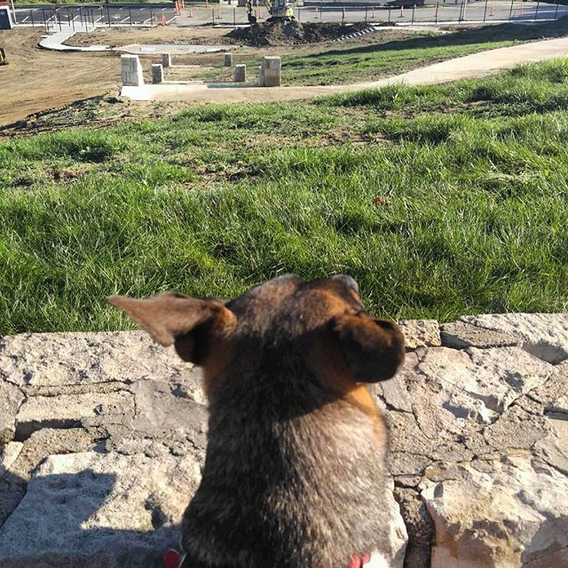 The new off leash area in#KCParks Case Park will open in May. Photo via Rachel Mullins. #offleash #dogpark