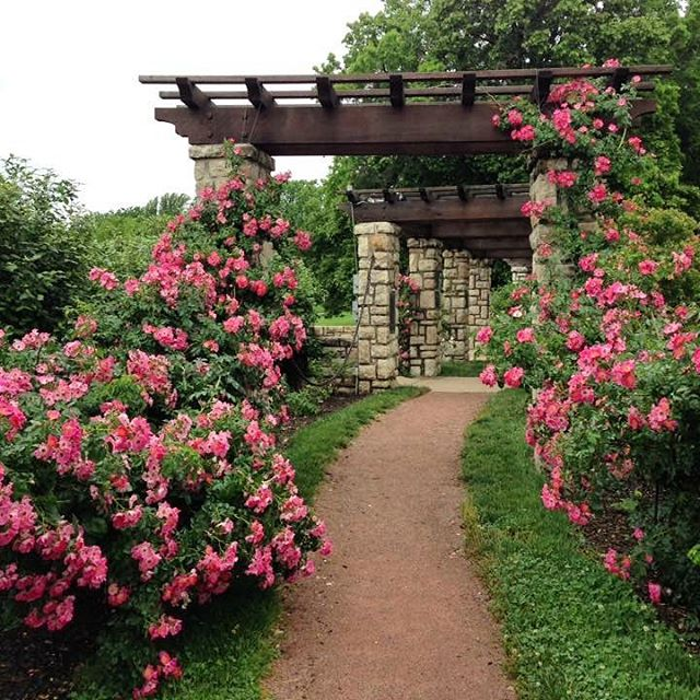 A picture from yesterday's photography class in the #KCParks Laura Conyers Smith Rose Garden in Loose Park.