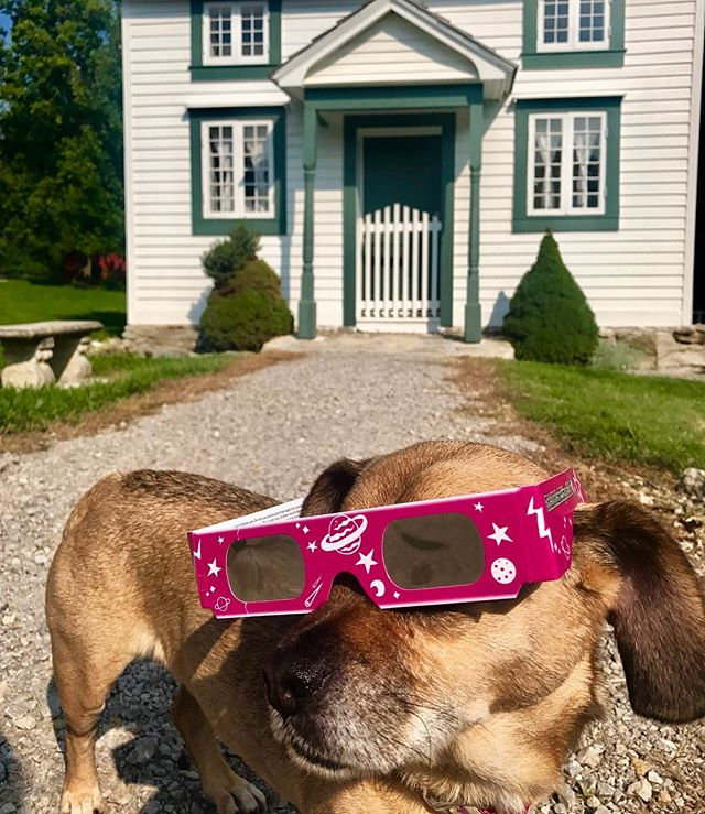 #PuggleInThePark conducted a site visit today for #TotalEclipseOfThePark and tested out our #eclipse glasses. This place is beautiful! Historic Event. Historic Place. Historic Year. #KCParks125 #KCParks #SomeDaysAreBetterThanOthers #OneWeekFromToday #solareclipse #solareclipse2017 #totality #OnceInALifetime