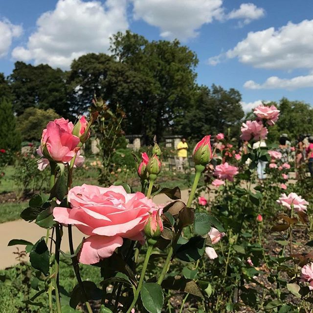 kcparks pleinairkc enjoy a free jazz concert in the loose park rose garden this sunday evening from 5