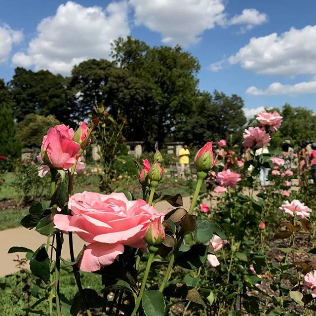 Have you already locked your love on the Old Red Bridge or looking for another #KCParks friendly way to celebrate your commitment? Plant a commemorative rose bush in Laura Conyers Smith Municipal Rose Garden in Loose Park. #ValentinesDay #RedBridgeLoveLocks #LoveIsARose #ValentinesDay2018 #LoveLove ️