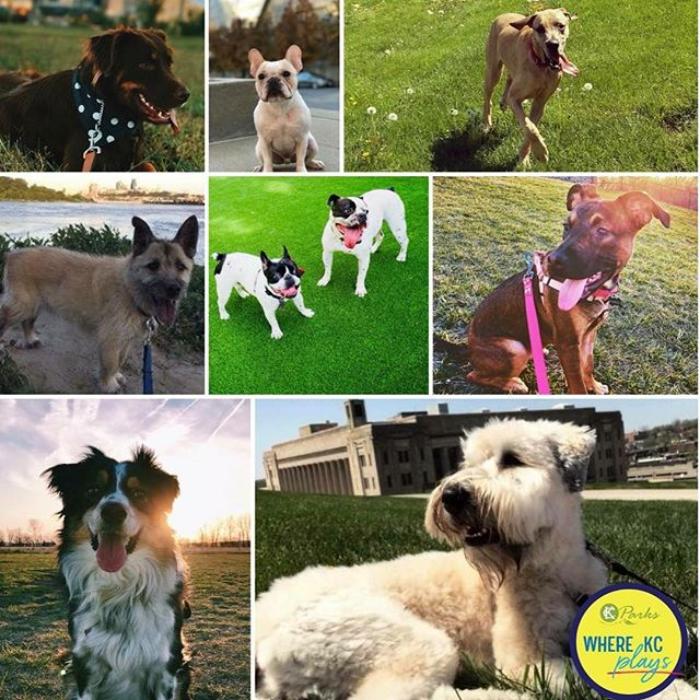 Congratulations to us! We have reached 350 members at West Terrace Dog Park! Thank you! #KCParks #WhereKCPlays Join us>> http://kcparks.org/places/wtdp/