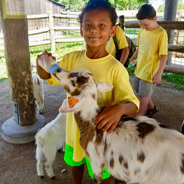 Tony Aguirre Community Center Summer Campers field trip to Deanna Rose Children's Farmstead #KCParks #WhereKCPlays