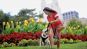Girl walking her dog in the park