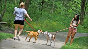Dogs playing with each other on the trails