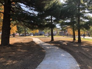 T shaped Trail at Holmes Park
