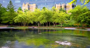 Beautiful buildings reflected on glass building behind trees