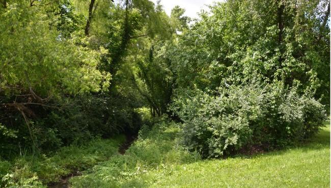Ingels Park
