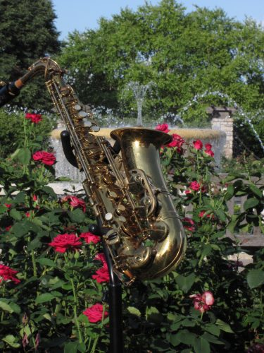 Jazz in Rose Garden