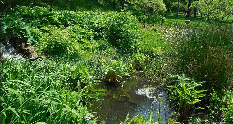 Mill Creek Park Eco-Pond Fountain