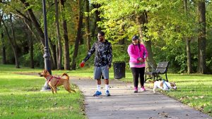 adults dog walking in the park