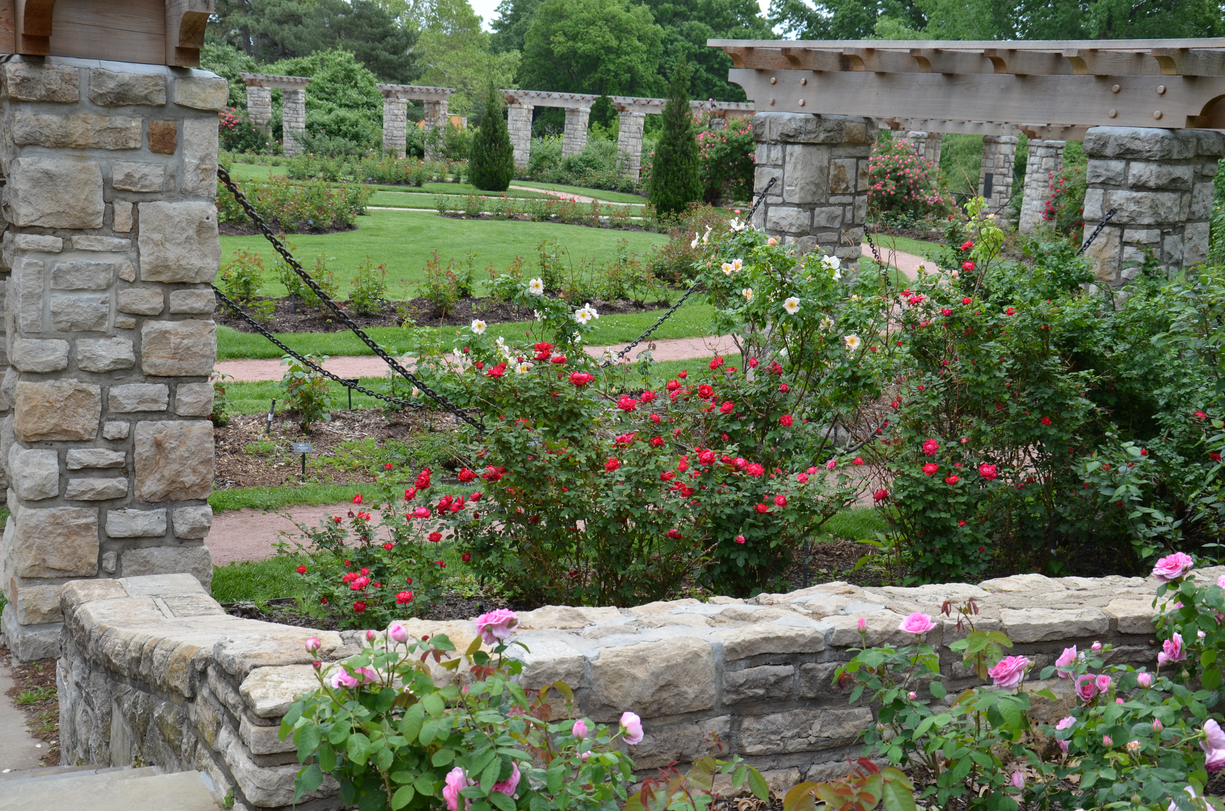 Roses In Garden: Laura Conyers Smith Municipal Rose Garden