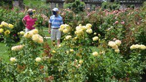 individuals in rose garden