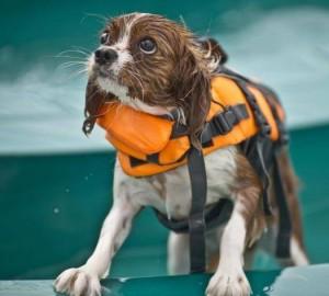 dog swim vest