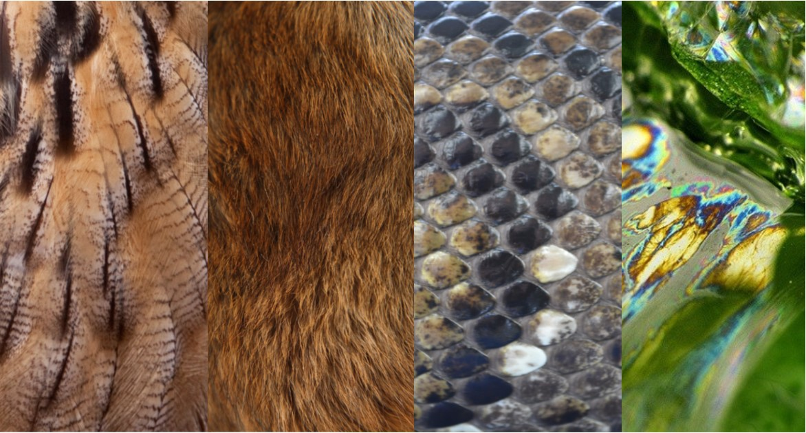 Feathers, Furs, Scales and Slime