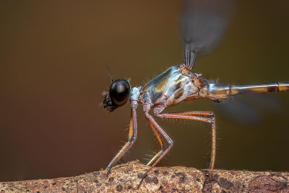 Bugs Among Us