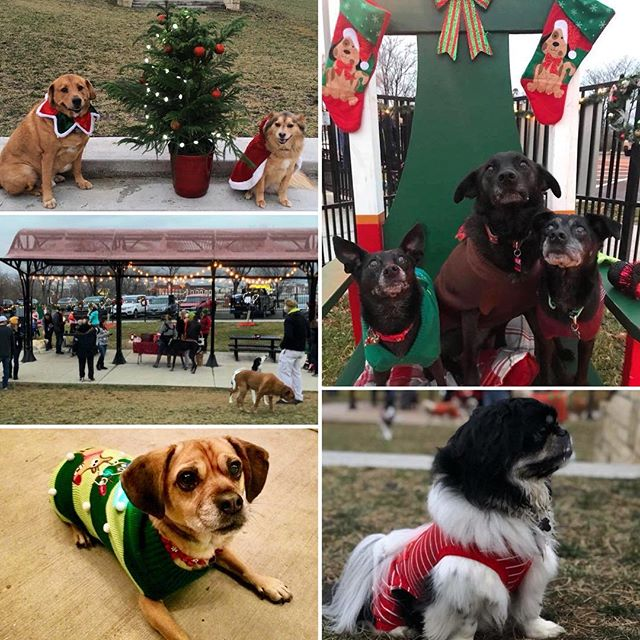 "#TrEatDrinkAndBeMerry! Join #KCParks West Terrace Dog Park and never miss a Member Mingle. Our downtown KCMO off-leash park features stunning views of the Missouri River, great amenities, and fun members-only ""pawties""! More>>https://kcparks.org/park/wtdp/"