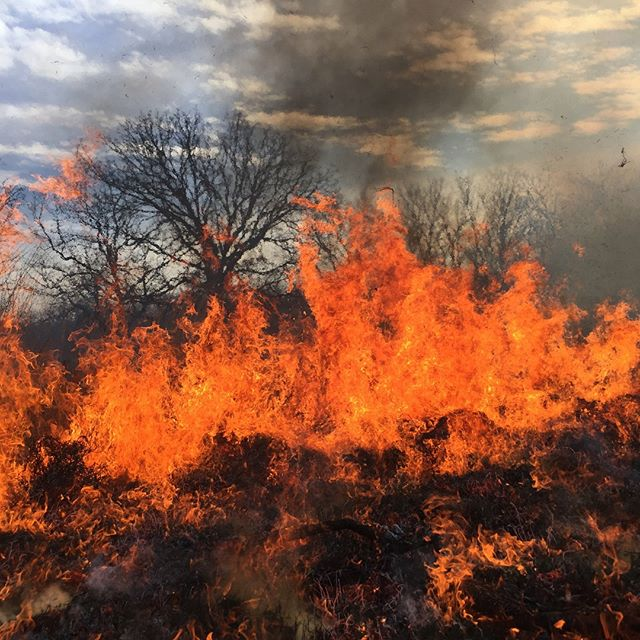 This will warm you up! Photos from Thursday's controlled burn in #KCParks Minor Park.