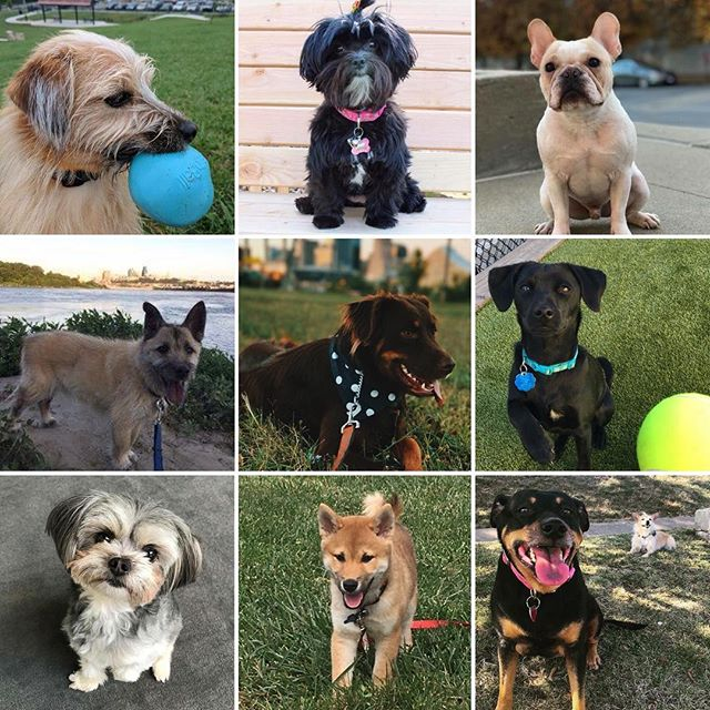 Happy #NationalPuppyDay from the dogs of West Terrace Dog Park! #WTDP #OffLeash #KCParks #WhereKCPlays