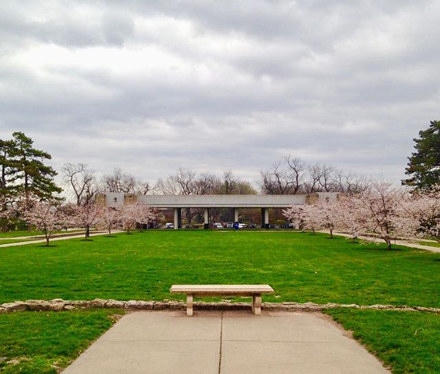 The cherry blossoms are blooming in Loose Park! #SpringHasSprung #KCParks #WhereKCPlays