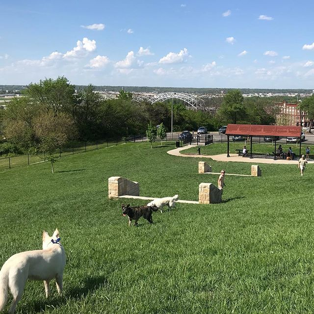 West Terrace Dog Park is back open for business after annual spring maintenance! During the month-long closure, the park was aerated, fertilized and over-seeded to rehabilitate the turf.