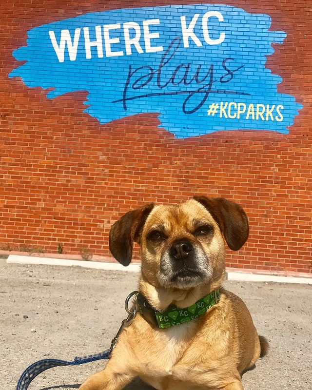 Happy Park and Recreation Month! #PuggleInThePark checked out our new mural! #DiscoverJuly #KCParks #WhereKCPlays …This @designedbyruthie mural is on our Central District office building in the Historic #WestBottoms (1520 W. 9th St.), right next to @ejsurbaneatery ..Take a picture by it during #FirstWeekends and tag @kcmoparks. #TakeASelfie #CityOfMurals #D2 #HowWeDoKC