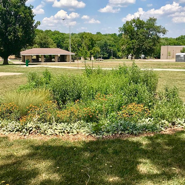 The rain gardens around the Swope Park Pavilion are looking great! #DiscoverJuly #KCParks #WhereKCPlays