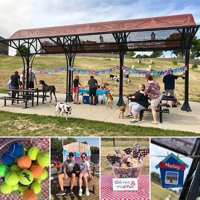 Great day and turnout for the First Anniversary of  West Terrace Dog Park! #PuggleInThePark #WTDP #KCParks #WhereKCPlays