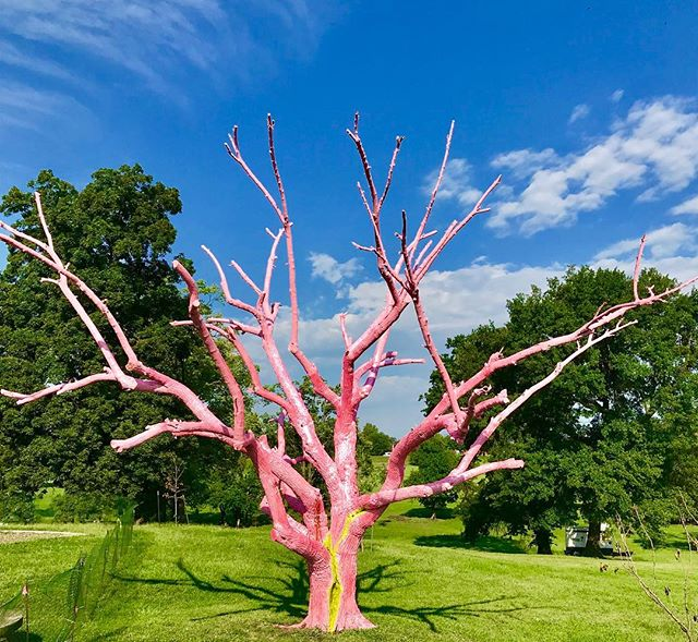 Check out @kcur893 For the story behind the @openspaceskc pink glitter tree in Swope Park and see the tree this weekend when you attend the @ethnickc festival! #TreeBrokenTree #BronchialTree @dylan.mortimer #OpenSpacesKC #KCParks #WhereKCPlays