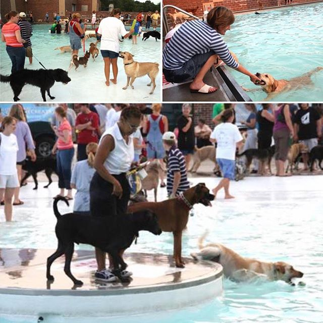 #ThrowbackThursday to our first dog swim party 9/2007 at Line Creek Community Center. #TBT ..Join us this weekend for #DippinDogs at The Springs on Saturday and at The Bay on Sunday! #WetDog #NAWS.Register at kcparks.eventbrite.com