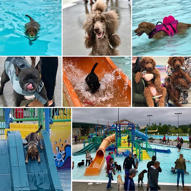 We had a blast today at The Springs! If you missed it or your dog wants more, we have #DippinDogs at The Bay Water Park tomorrow. You can pay at the door! #KCParks #WhereKCPlays