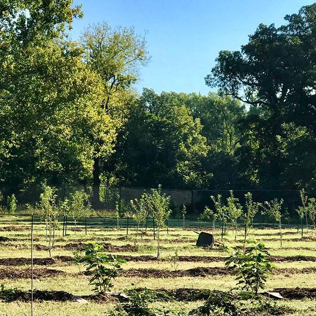 "Urban Orchard Ribbon CuttingFriday, September 28, 201810 a.m.Swope Park, 4801 Gregory Blvd.(behind the Off Leash Dog Park)Join 5th District City Councilwoman Alissia Canady and Councilman Lee Barnes Jr., KC Parks officials, Kansas City Urban Farm Co-op, and the Giving Grove to celebrate one of the country's largest urban orchards in Kansas City's largest park!Last spring, local organizations teamed up to plant 150 fruit trees–a self-proclaimed ""fruit forest"" in the heart of the city!Once all phases are complete, the team expects it to be one of the largest urban orchards in the country yielding more than 1 million pounds of fresh fruit over the next 20 years. #KCParks #WhereKCPlays"