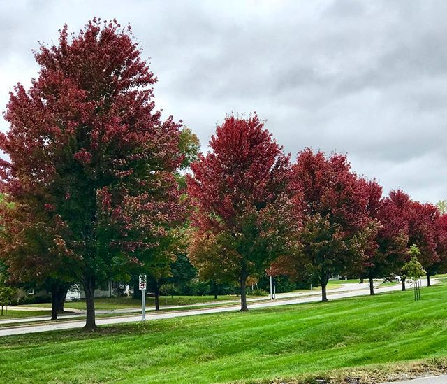 It's #FallYall! The trees are looking gorgeous along Ward Parkway. #KCParks #WhereKCPlays