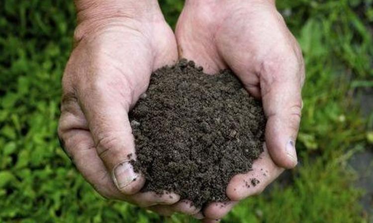 Become a Missouri Master Gardener
