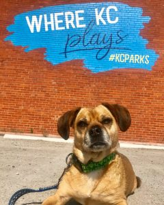 Dog infront of KC Parks wall art