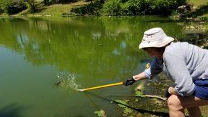 volunteer cleaning pond