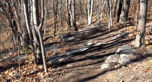 Blue Valley Oxbow Trail