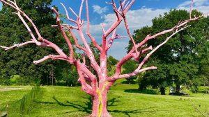 Bright Tree Broken Tree by Dylan Mortimer